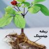 عادات غذایی(۱۵) : تغذیه و یادگیری – بخش هفتم: تقویت حافظه/ قسمت پنجم:گیاهان تقویت کننده حافظه( ۳-جینسنگ)